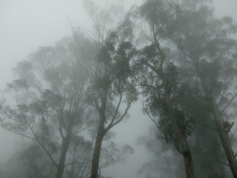 Nube y árboles imagen de archivo