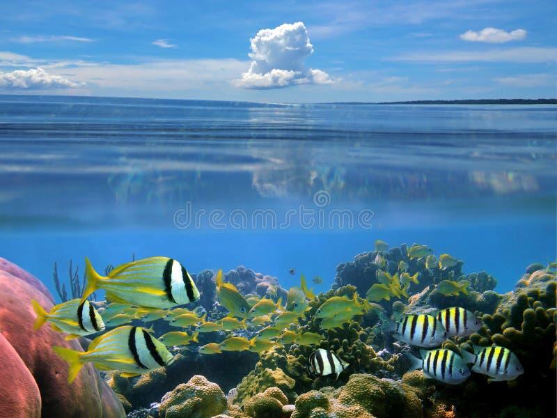 Nube y pescados foto de archivo