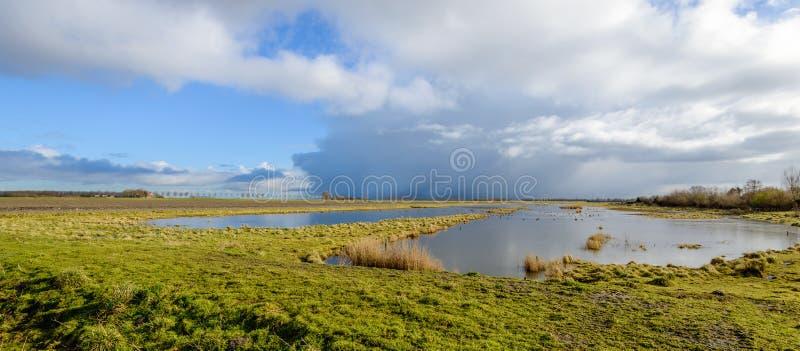 Nubes amenazadoras sobre una reserva de naturaleza pantanosa en Países Bajos imagenes de archivo