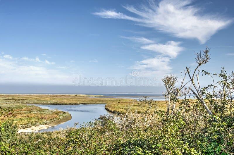 Nubes, arbustos, cañas y la línea de la playa imagen de archivo libre de regalías