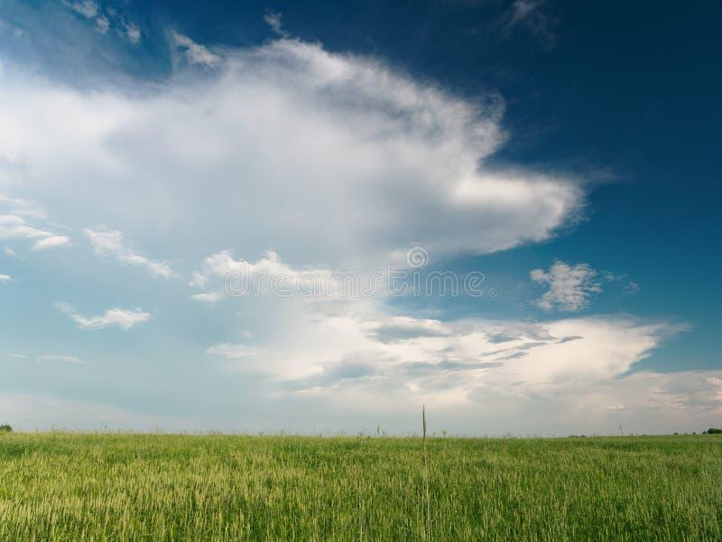 Nubes blancas hermosas en el flotador del cielo sobre el campo imagen de archivo