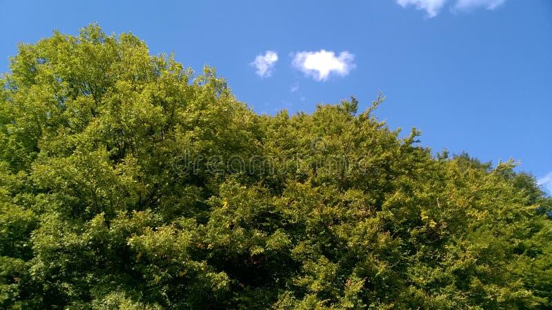 Nubes de cúmulo blancas sobre las montañas verdes foto de archivo