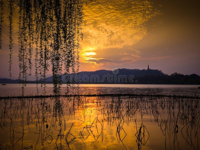 Nubes de oro sobre el lago con la montaña en distancia Silueta de los troncos del loto y de las ramas de sauce muertos contra pue fotografía de archivo