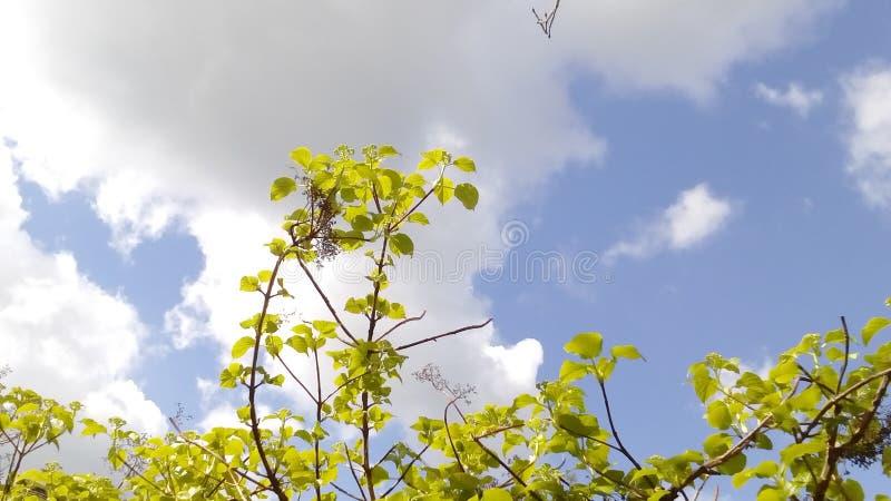 Nubes del verano foto de archivo