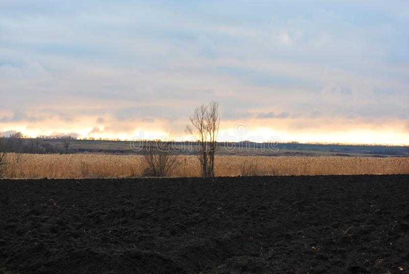Nubes en el horizonte en los rayos pasados del sol poniente sobre las cañas secas, los árboles sin las hojas y campo arado foto de archivo