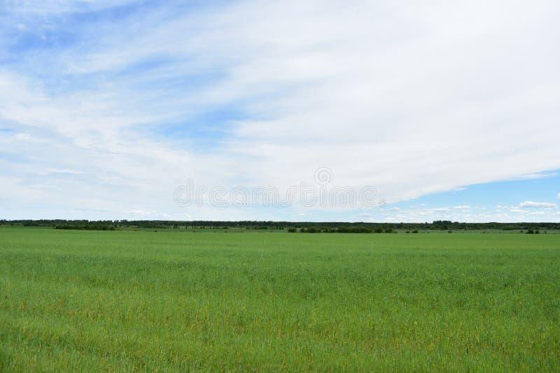Nubes enormes del cielo de la hierba del verde del campo del pueblo rural fotos de archivo