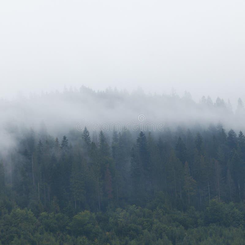 Nubes hermosas en el bosque de la montaña, niebla de las montañas foto de archivo