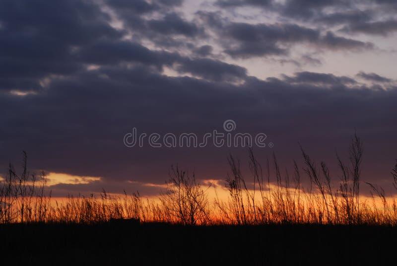 Download Nubes, Malas Hierbas, Y Puesta Del Sol Foto de archivo - Imagen de tarde, silueta: 7279046