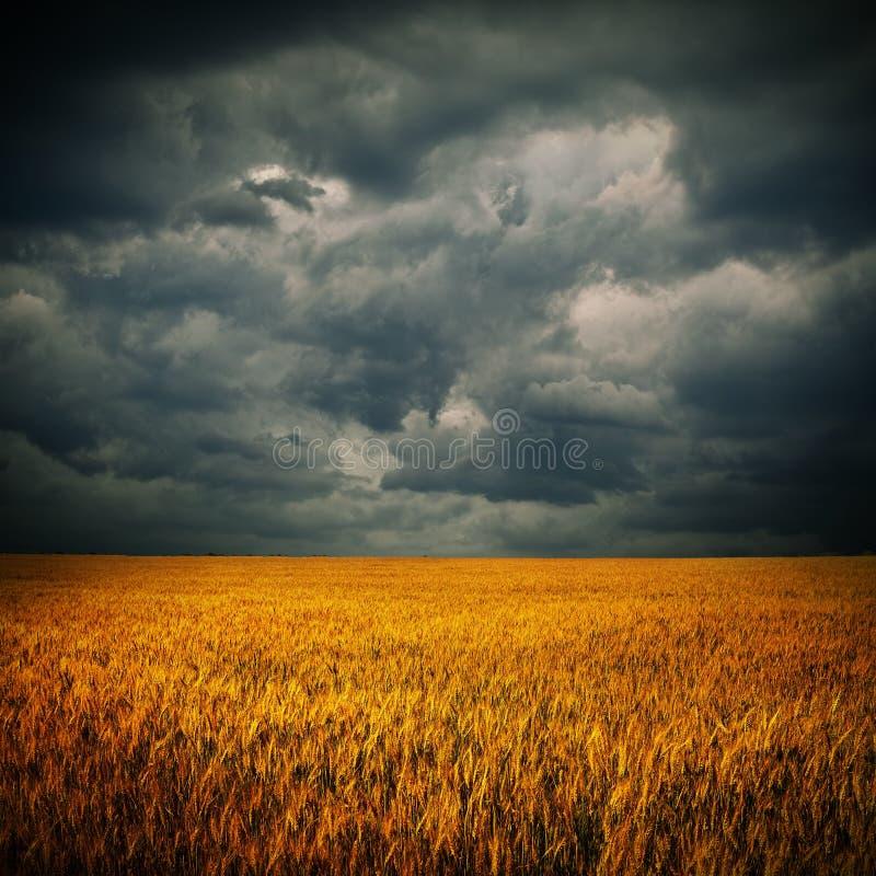 Nubes oscuras sobre campo de trigo imagenes de archivo