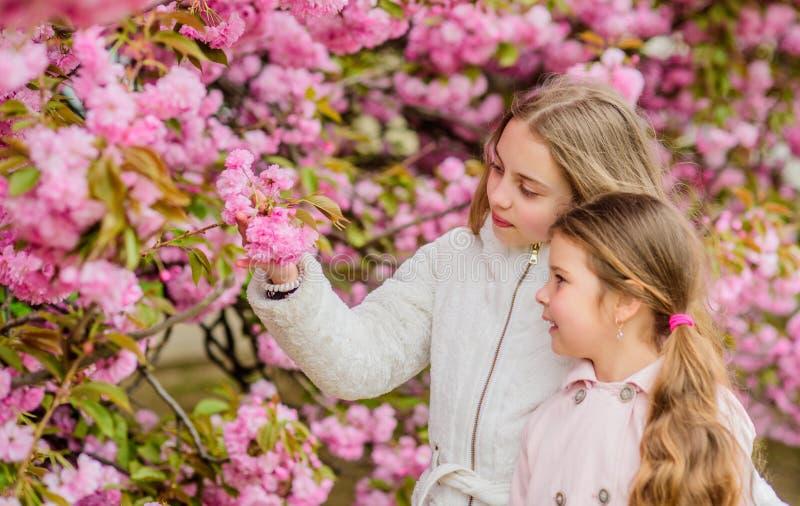 Nubes rosadas suaves de las flores Los ni?os disfrutan de la primavera caliente Muchachas que presentan cerca de Sakura Perdido e foto de archivo libre de regalías