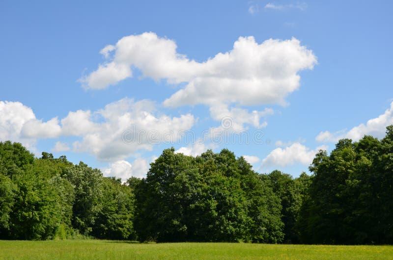Nubes sobre el más forrest imagen de archivo libre de regalías