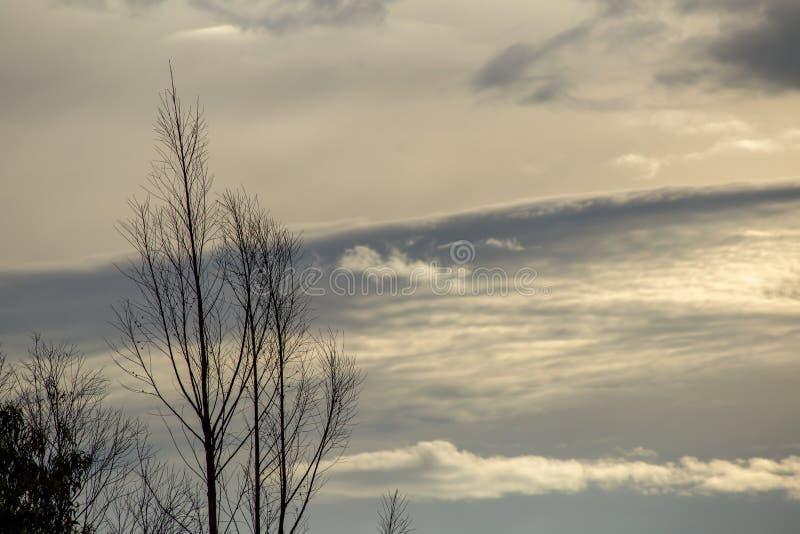 Nubes sutiles detr?s de un ?rbol deshojado fotos de archivo