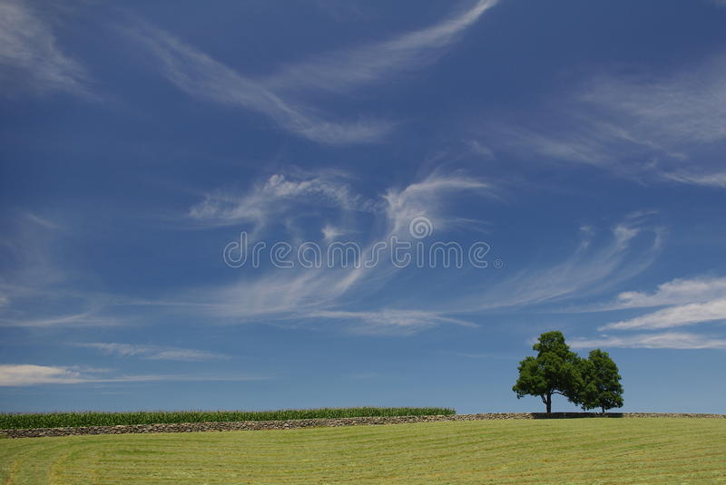 Nubes Wispy en un día de verano - paisaje imagen de archivo libre de regalías