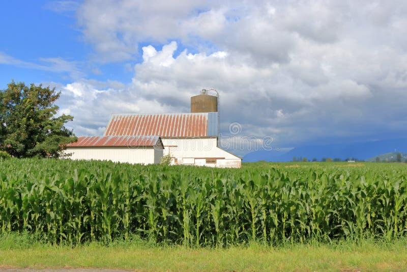 Nubes y granja tempestuosas del verano fotografía de archivo