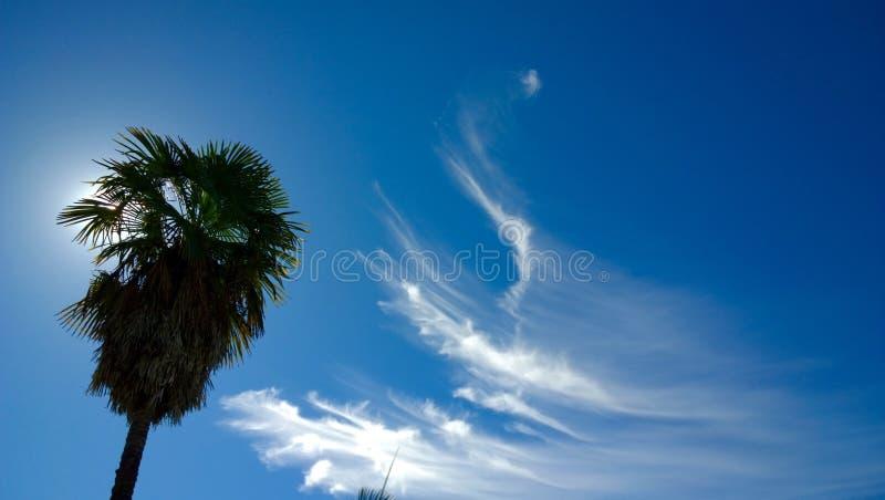 Nubes y palmera de cirro fotografía de archivo