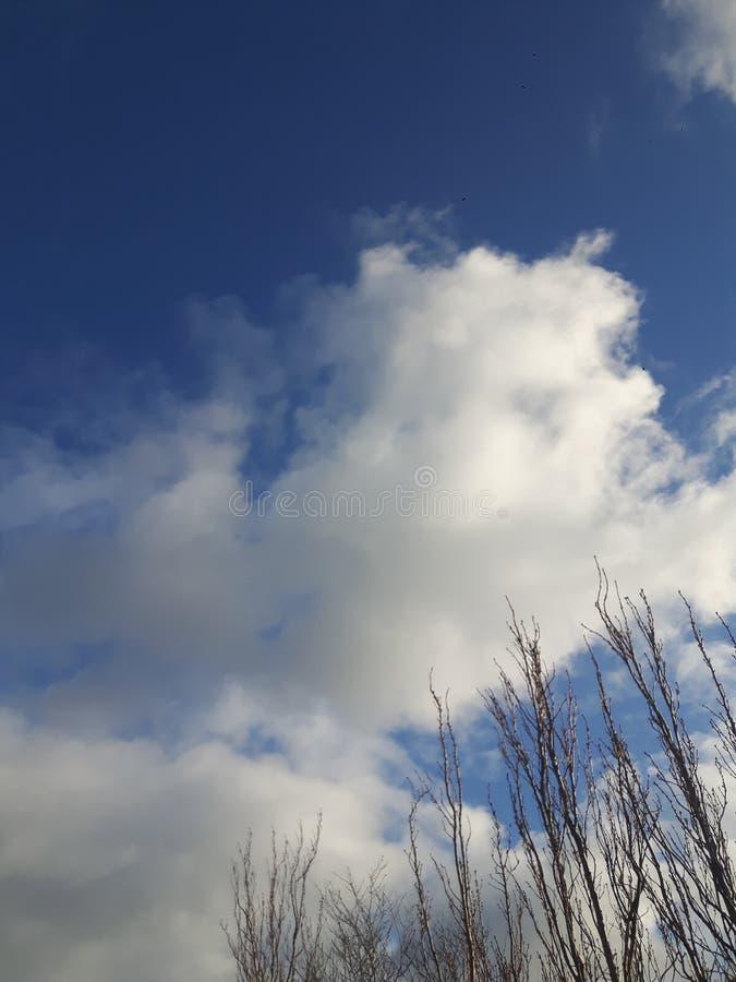 Nubes y ramas fotografía de archivo