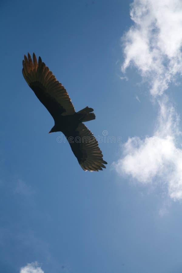 Download Nubi immagine stock. Immagine di volo, preda, sole, nube - 7315191