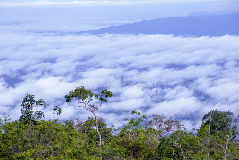 Nubi ed alberi immagini stock libere da diritti