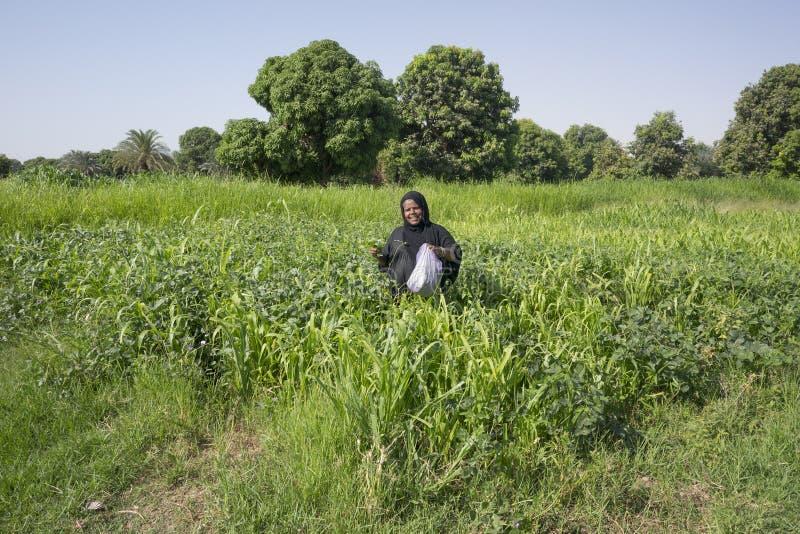 Nubijska kobieta w tradycyjnych czerni sukni wlaks though zieleni polach fotografia stock