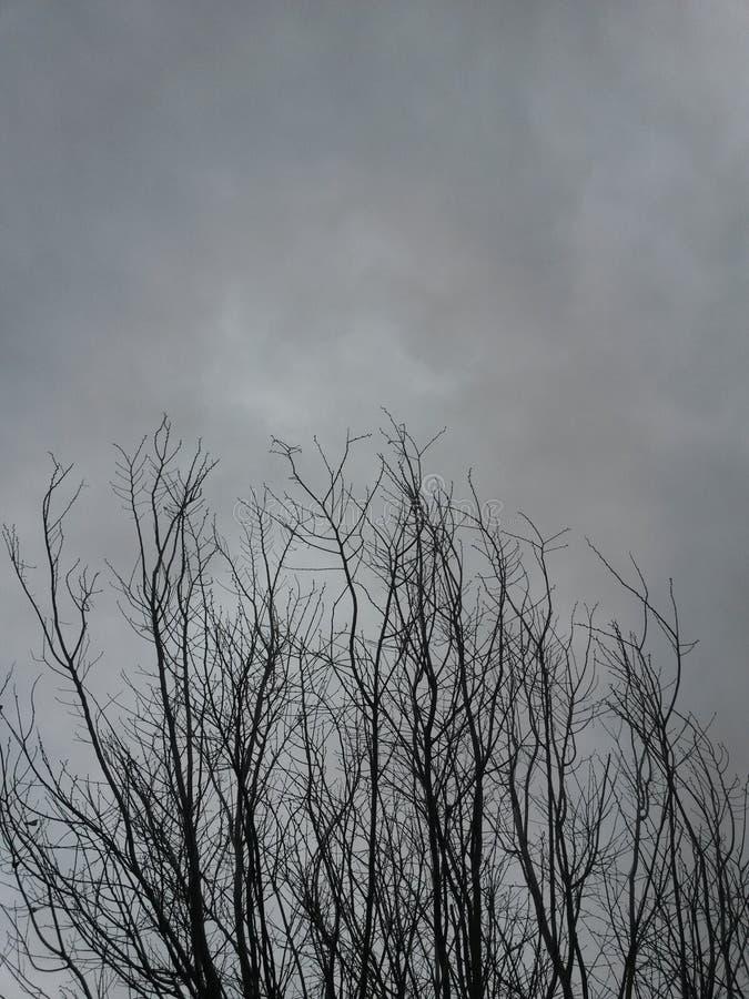 Nublado y árbol imagenes de archivo