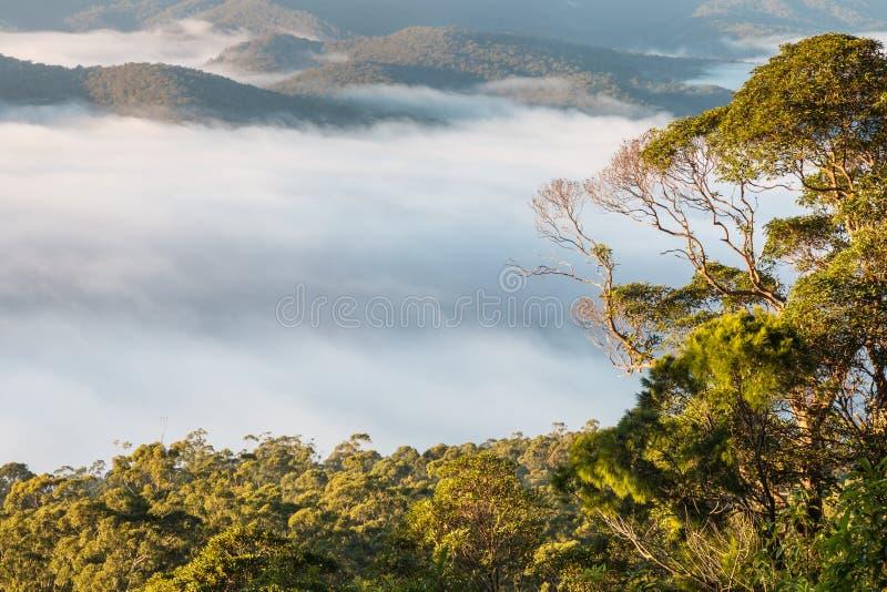 Nuble-se a inversão acima da floresta úmida tropical no parque nacional de Tamborine fotos de stock royalty free
