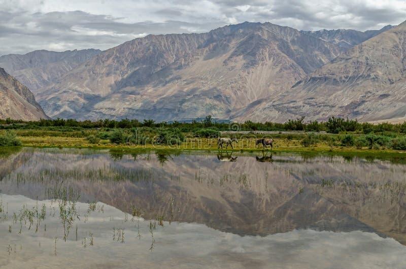 Nubra dolina nieodkryty królestwo; l10a:dziedzina natura obraz royalty free