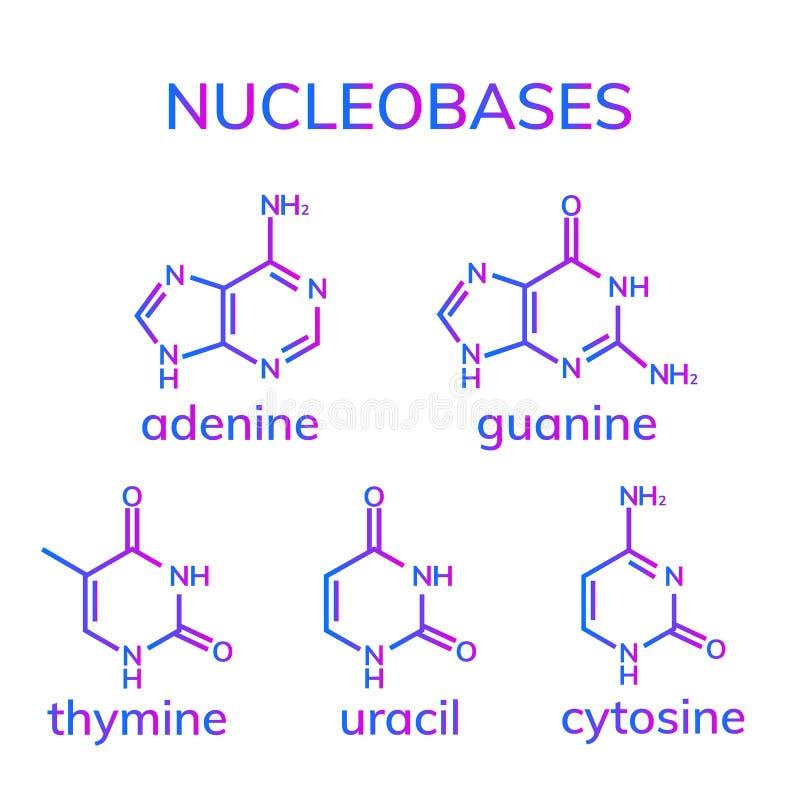Nucleobases da pirimidina e da purina ilustração royalty free