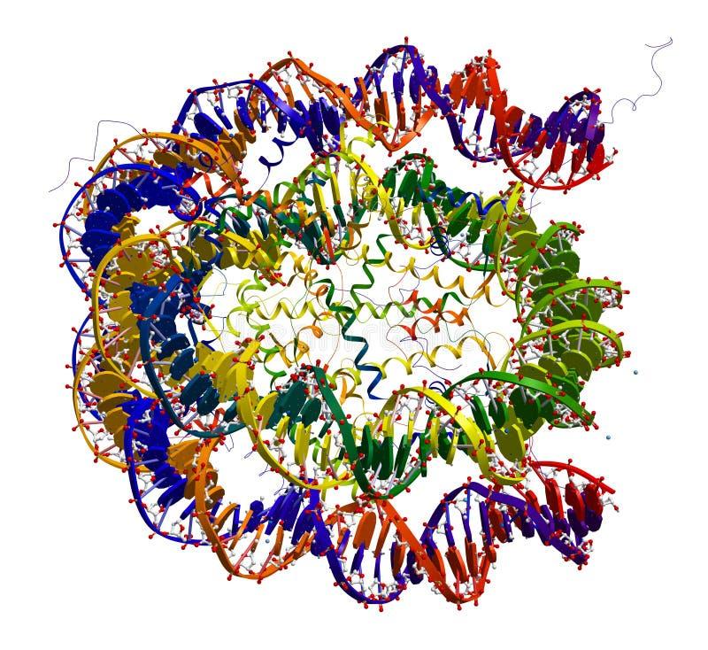 nucleosome δομή μορίων πυρήνων απεικόνιση αποθεμάτων