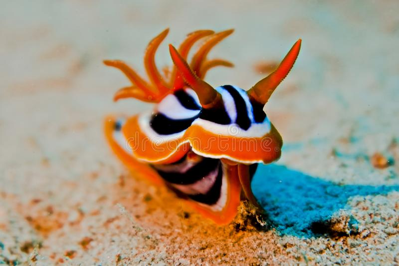 Nudi Branch royalty free stock images