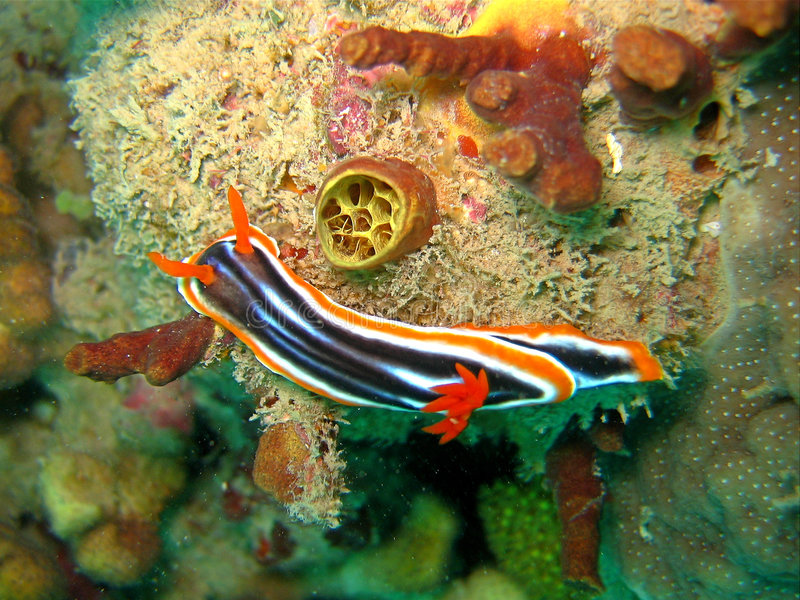 nudibranch睡衣 免版税库存照片