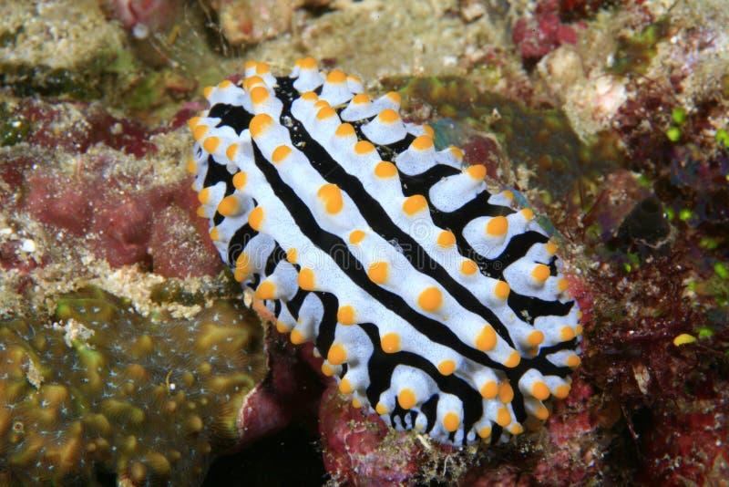 nudibranch стоковые фото