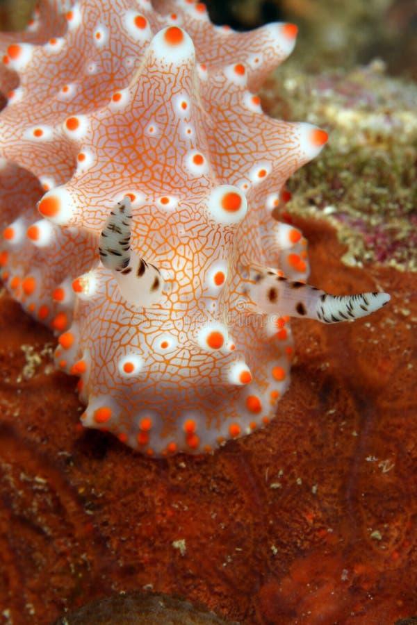 Nudibranch fotografia de stock