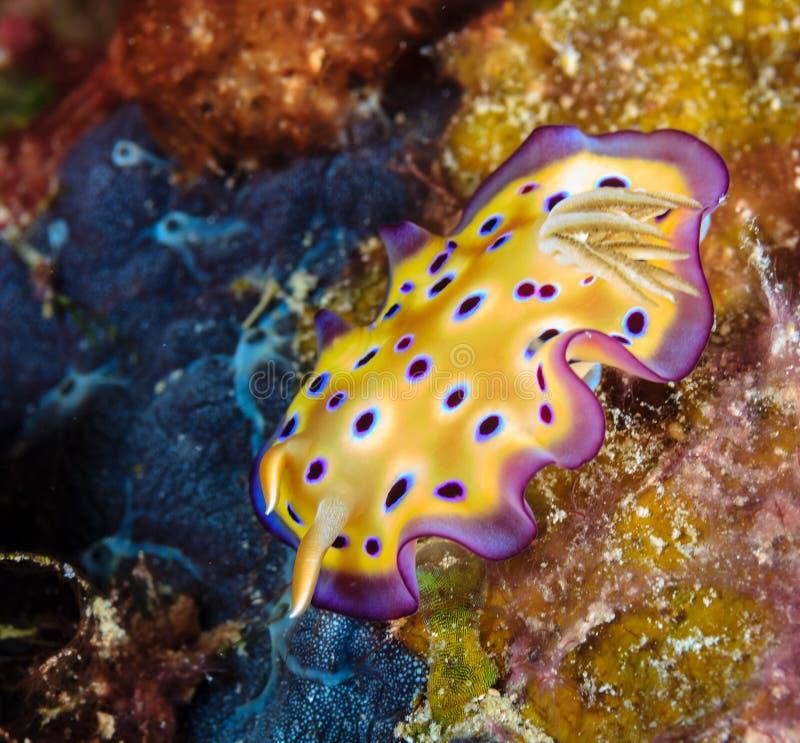 Nudibranch estúpido coloreado imagen de archivo libre de regalías