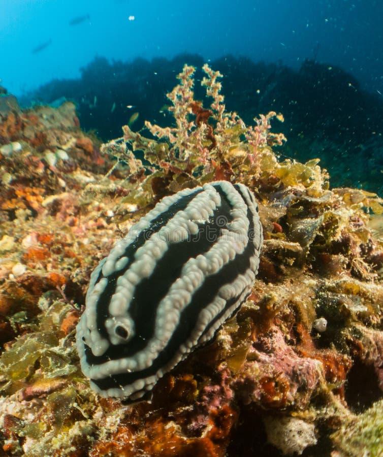 Nudibranch, Riff und Koralle Malediven lizenzfreie stockfotos