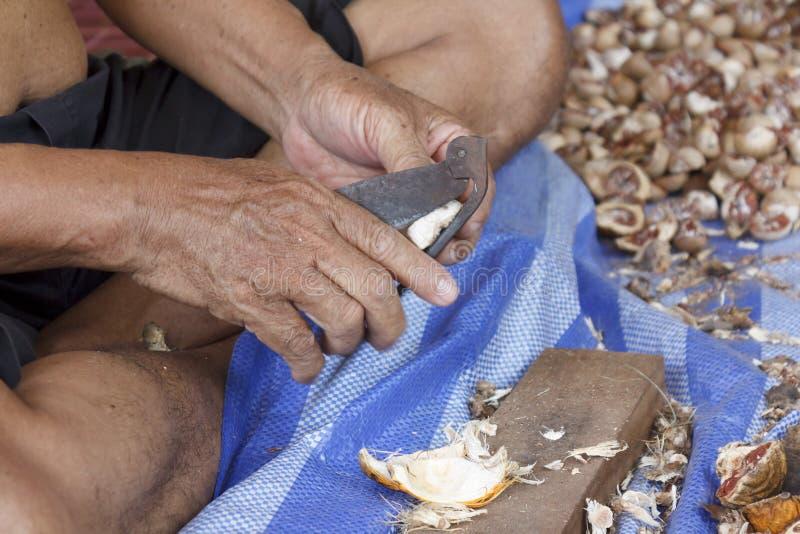 Nueces de betel de la cáscara imagen de archivo