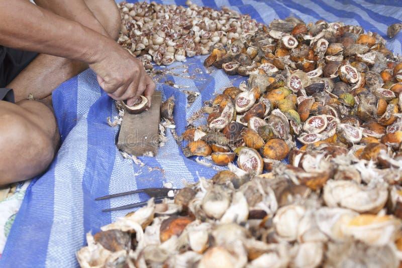 Nueces de betel de la cáscara fotografía de archivo libre de regalías
