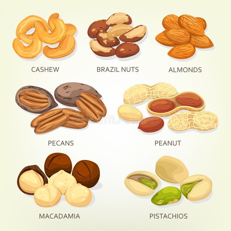 Nueces de Brasil y semillas de la fruta del anacardo, granos stock de ilustración