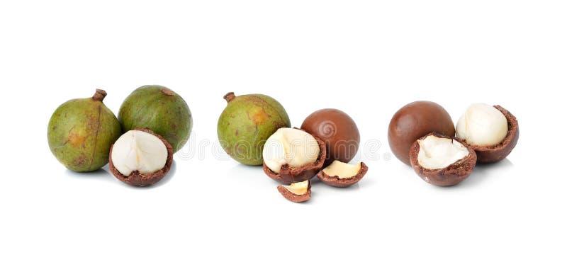 Nueces de macadamia imagenes de archivo