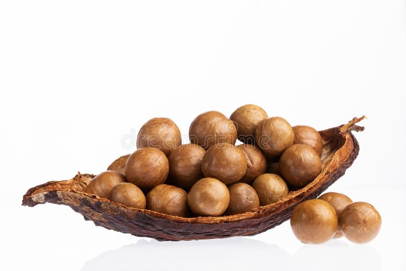 Nueces de macadamia orgánicas - integrifolia de macadamia Fondo blanco imagen de archivo libre de regalías