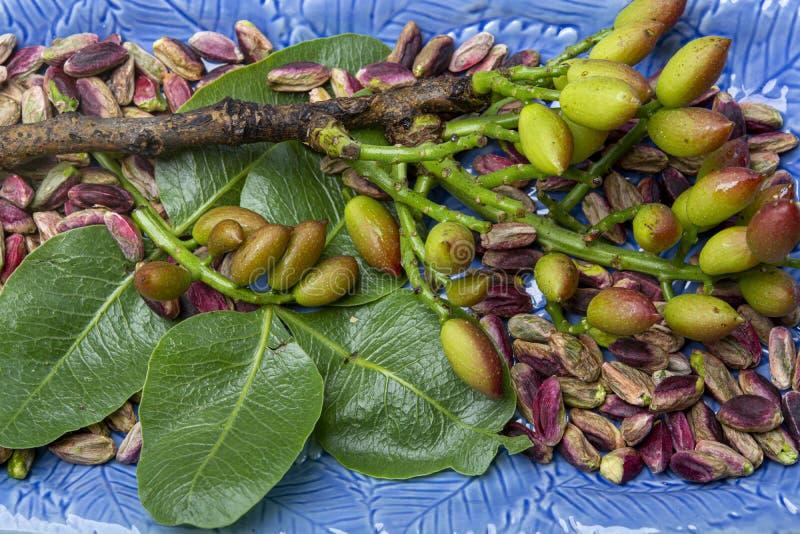 Nueces de pistachos verdes esmeralda de la ciudad Bronte, situado en cuestas del Mt Producto regional del Etna, Sicilia, Italia fotos de archivo libres de regalías