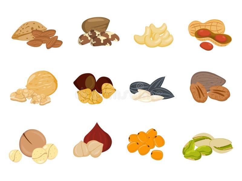 Nueces, ejemplo del vector de las semillas ilustración del vector
