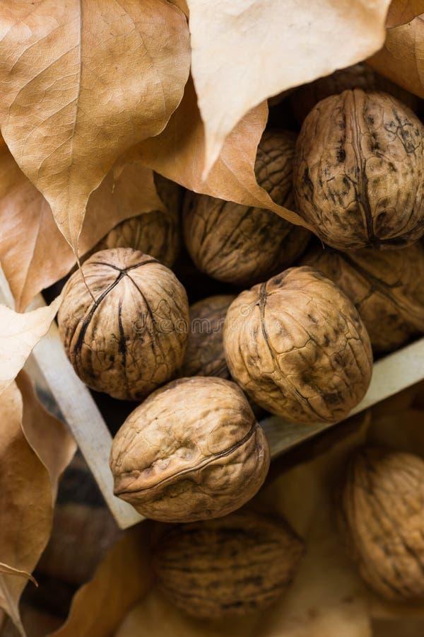 Nueces enteras en la caja de madera, hojas de otoño secas marrones, al aire libre, humor de la caída, acción de gracias, Hallowee fotografía de archivo libre de regalías