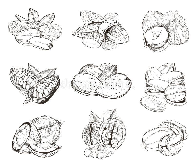 Nueces grabadas aisladas Sistema de nueces mezcladas libre illustration