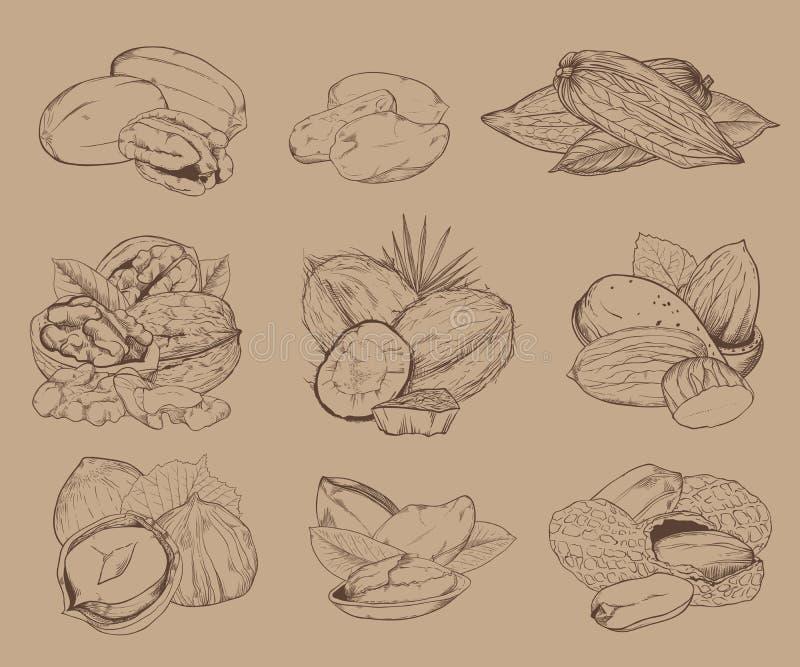 Nueces grabadas Sistema de nueces mezcladas libre illustration