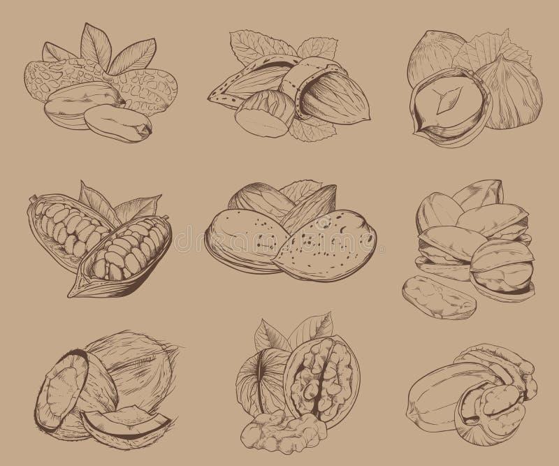 Nueces grabadas Sistema de nueces mezcladas stock de ilustración