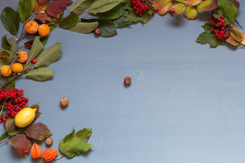 Nueces rojas y amarillas de la fruta de las hojas de otoño en un fondo gris foto de archivo libre de regalías