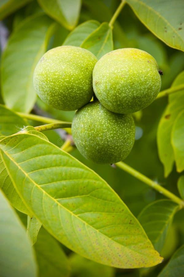 Download Nueces verdes foto de archivo. Imagen de tuerca, cubo - 1287996