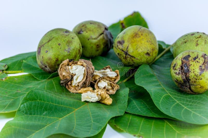 Nueces verdes frescas de la cáscara fotos de archivo libres de regalías