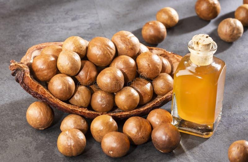 Nueces y aceite de la macadamia - integrifolia de macadamia Espacio del texto foto de archivo libre de regalías