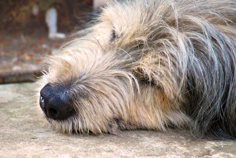 Nuestros animales domésticos imágenes de archivo libres de regalías